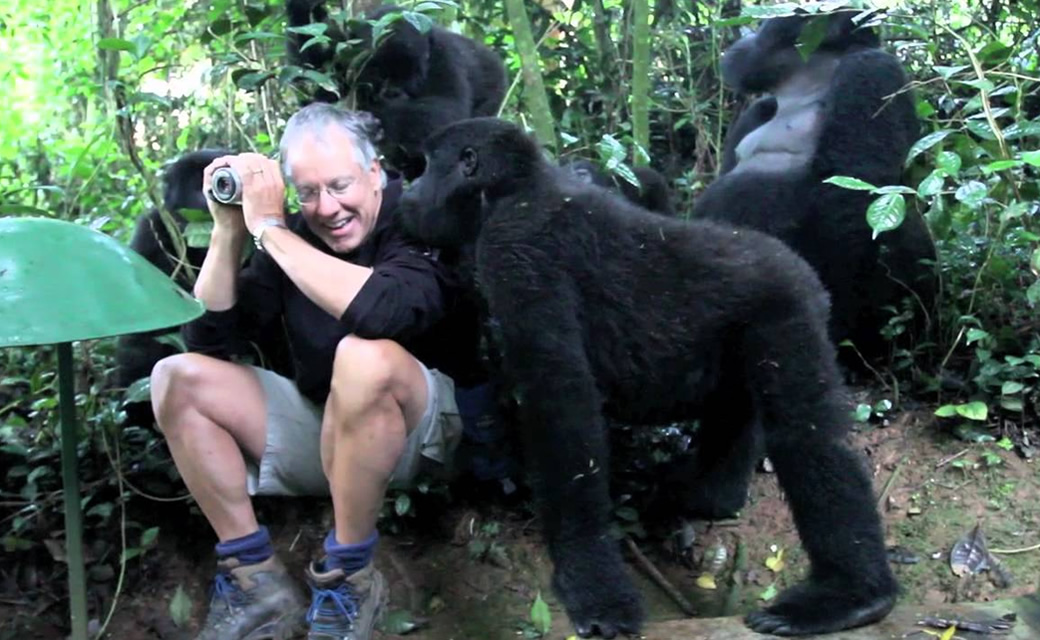 Touched by a Gorilla