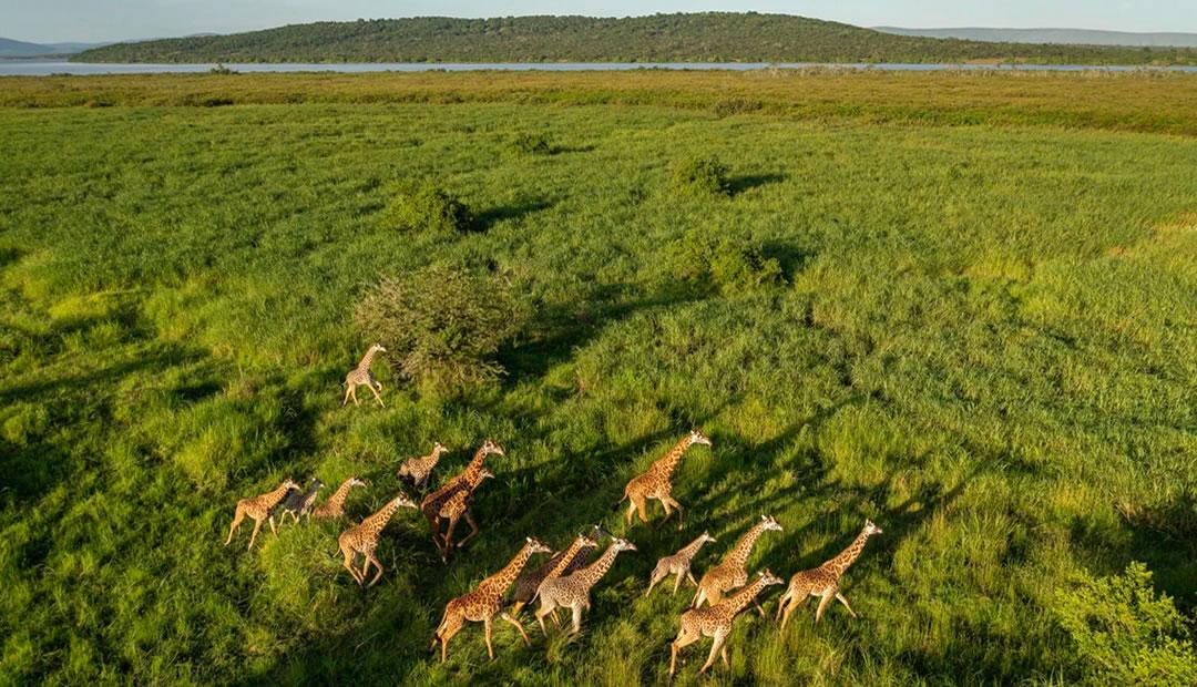 Akagera Wildlife