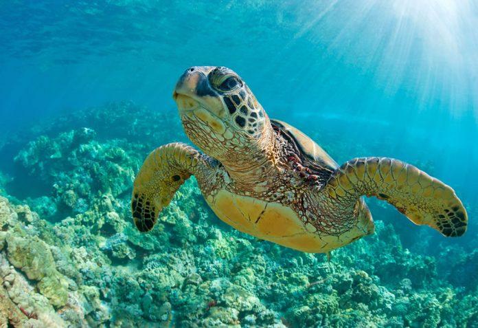 Watamu Sea Turtle